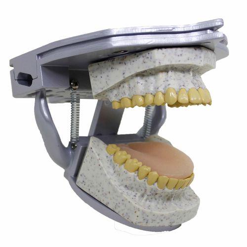 dental radiography test phantom