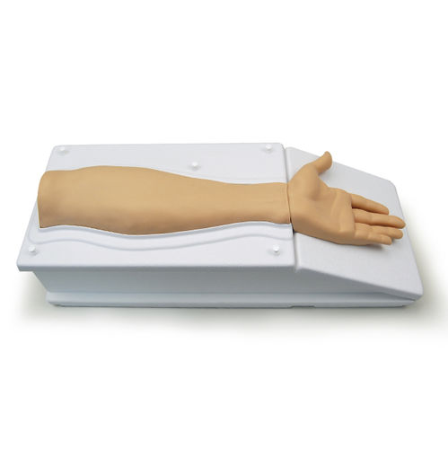 dissection simulator / anatomy / arm