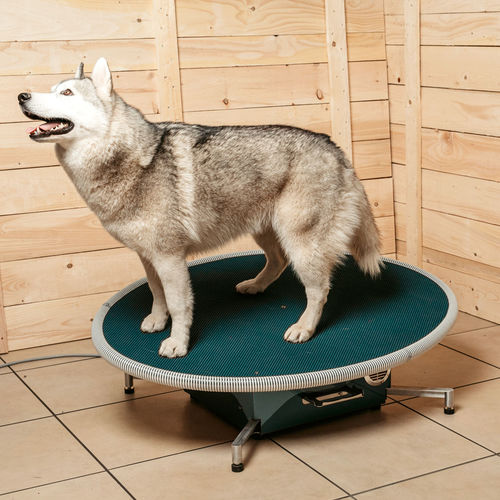 veterinary balance board