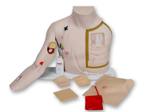 intravenous catheterization simulator / training / torso