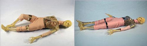 radiography test phantom / whole body