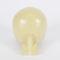 skull model / for teaching / for implantology / craniotomy