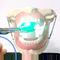 denture model / for teaching / anesthesia