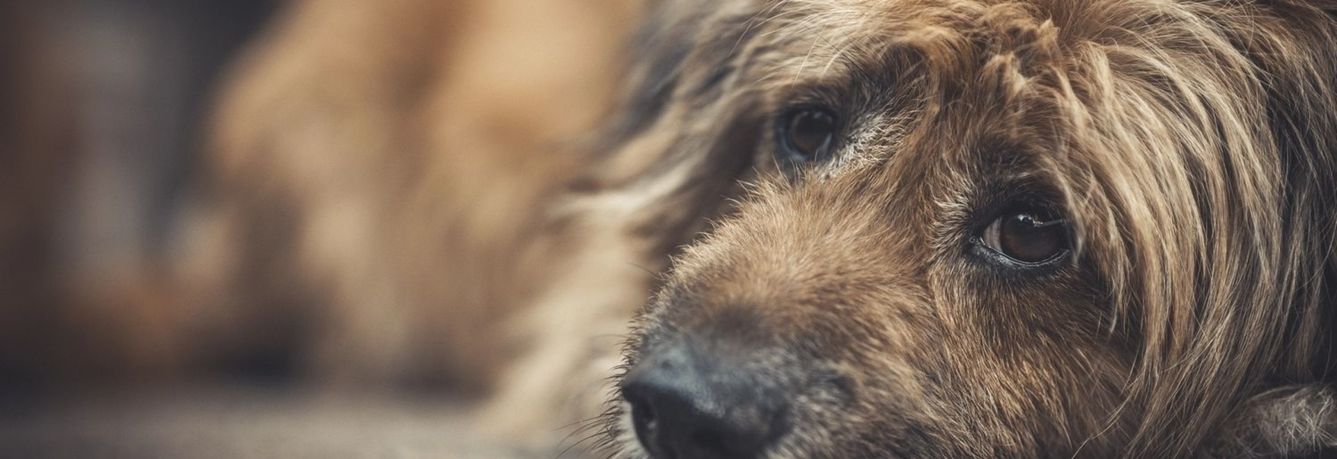 FDA conditionally approves first oral canine lymphoma treatment
