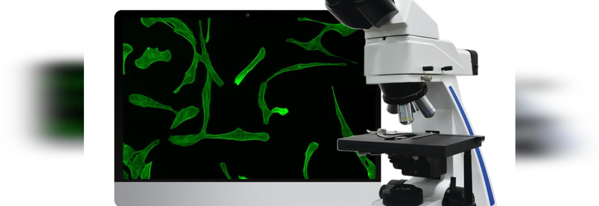 MF31 Fluorescence microscope