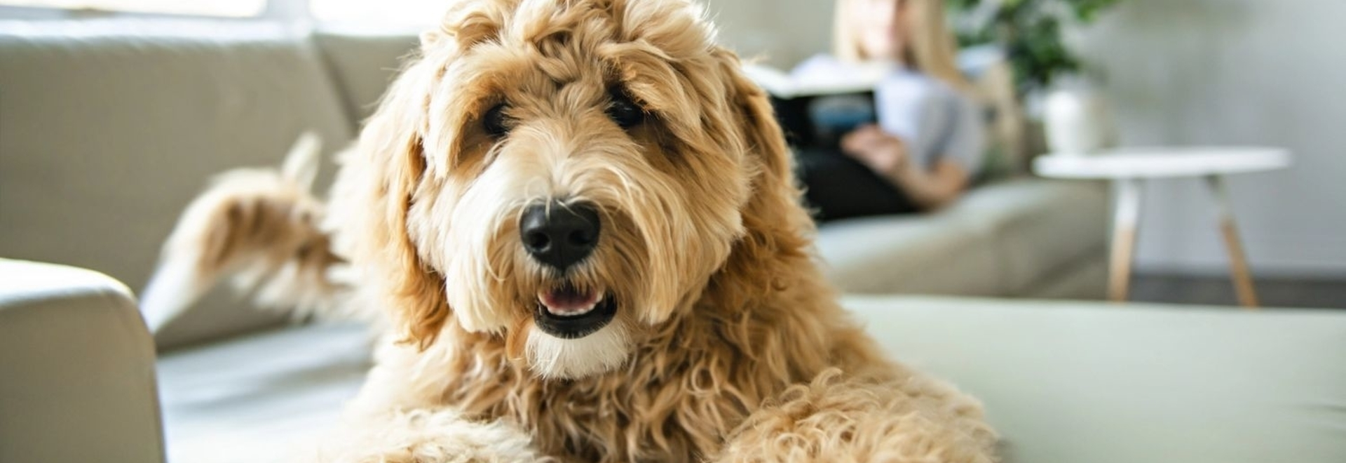 New cancer screening test for dogs now available