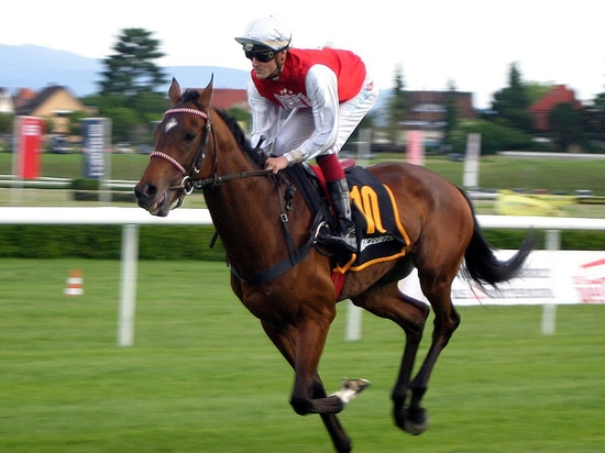 Which is the horse and which the jockey?