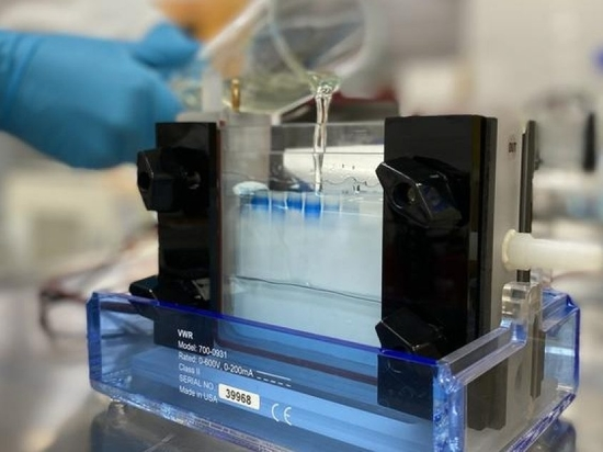 Gel electrophoresis to detect electrochemical protein degradation.