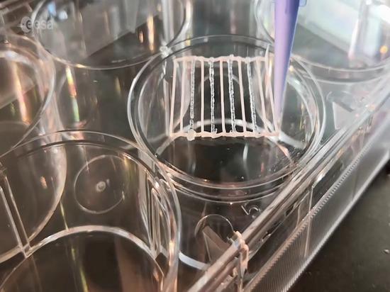 Bioprinted skin and bones for astronauts