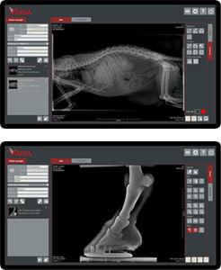 動物放射線学ソフト