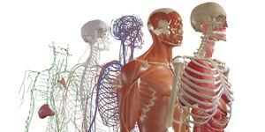 解剖学ソフト