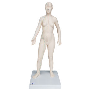 全身解剖模型