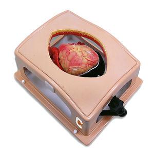 胸部手術用シミュレーター