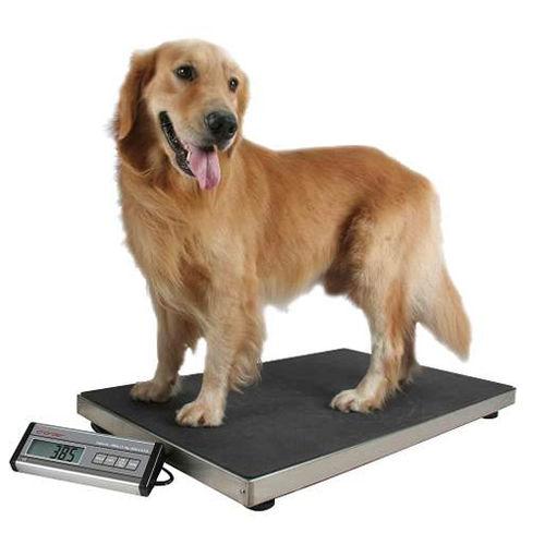 電動動物用量り / 大型動物 / デジタルディスプレイ付き / 移動式パネル