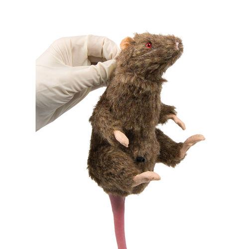 動物研究用実習用マネキン