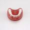 歯並び用解剖模型PE-PRO020Nissin Dental Products Inc.