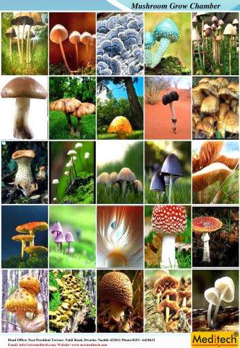 mushroom grow chamber
