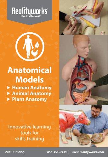 anatomical catalog