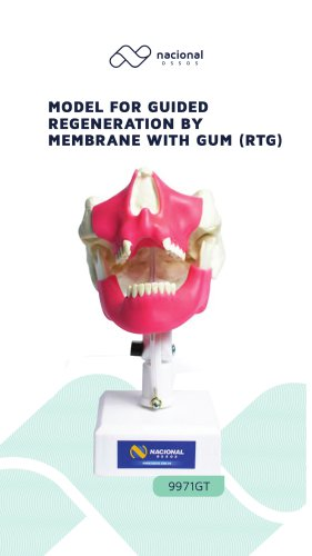 Model for Guided Regeneration by Membrane with Gum (RTG)