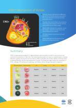 cervical cancer rapid diagnostic test - 4