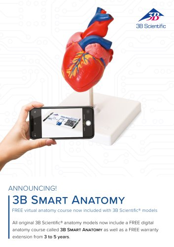 3B Smart Anatomy included with 3B Scientific models
