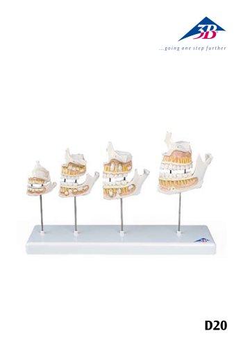 D20 Dentition Development
