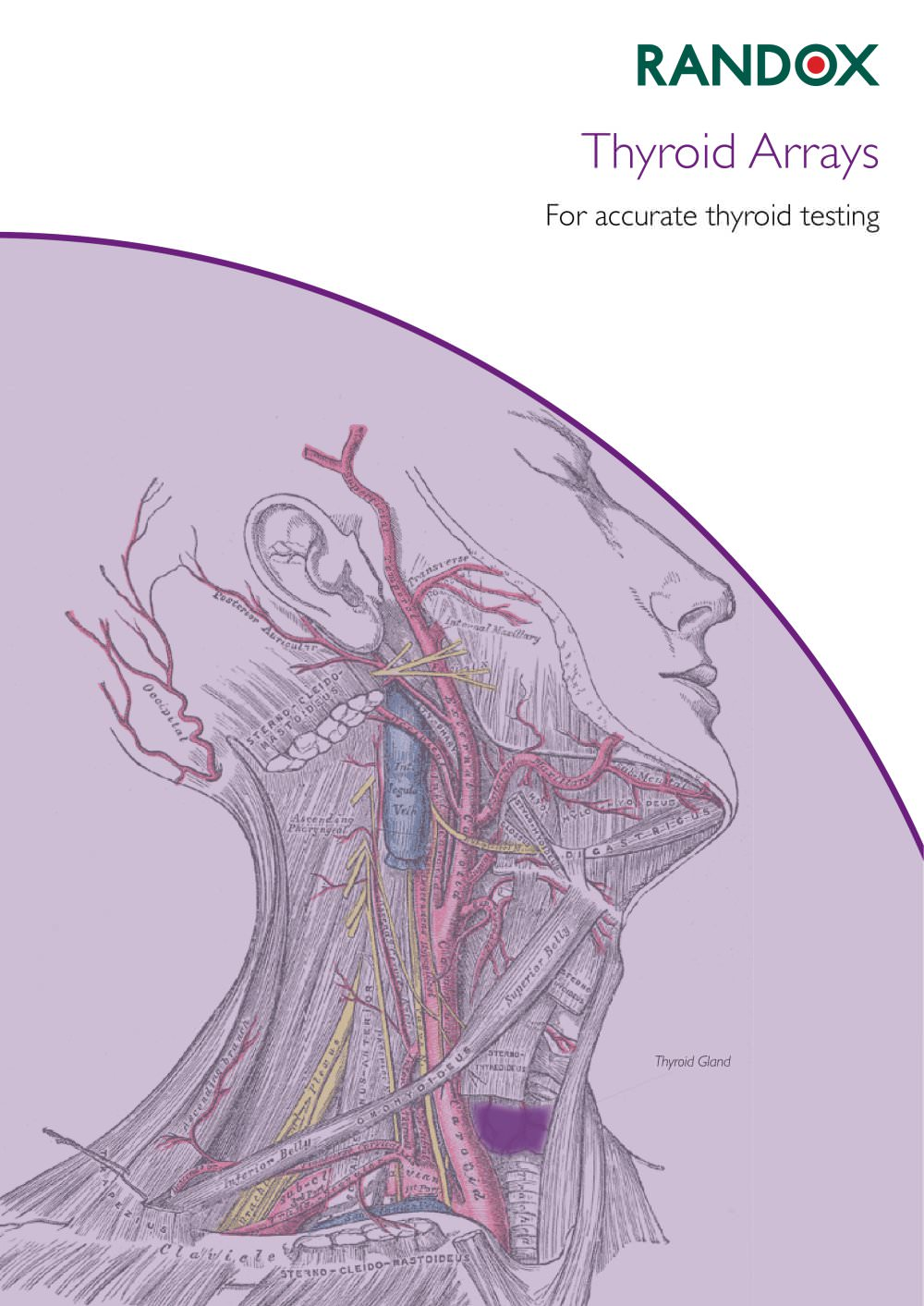Thyroid Gland Pdf