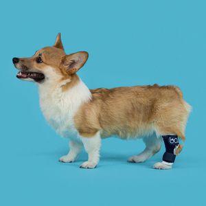 tala veterinária de pés