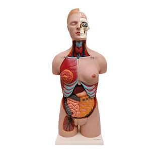 modelo de tronco