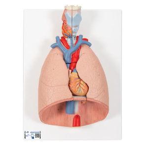 modelo de pulmão