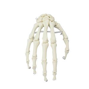 modelo de mão