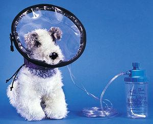 campânula de oxigênio veterinária