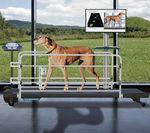 sistema de análise da marcha / veterinário