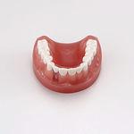 modelo anatômico de dentição